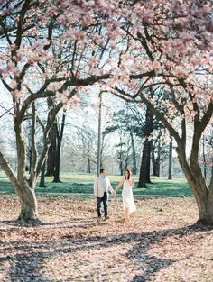 Pink blossom filled engagement session: http://www.stylemepretty.com/missouri-weddings/st-louis/2016/05/25/romantic-spring-engagement/ | Photography: Mike Cassimatis - http://www.mnc-photography.com/