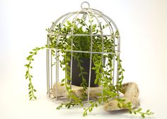 Shabby Chic Decorative Birdcage Small White by AShadeOfTealDesign