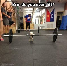 This puppy lifts...