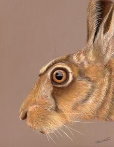 The Eyes Have It - Hare Portrait
