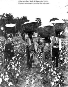 Pounds of cotton fill woven baskets on their way to the scale, bringing satisfaction to the owner of this plantation resting in the Big House and the slaves that labored that they made their quota before sun down. Black History Facts, Black History Month, Old Photos, Vintage Photos, African Diaspora, African American History, History Books, Historical Photos, Illustration