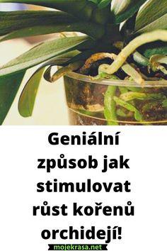 Korn, Green Beans, Herbs, Vegetables, Garden, Plants, Alcohol, Garten, Lawn And Garden