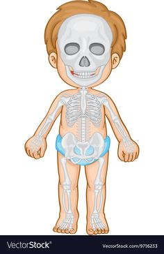 Skeletal system in human boy Royalty Free Vector Image Senses Preschool, Preschool Worksheets, Thank You Cards From Kids, Human Body Systems, Skeletal System, Kids Education, Pre School, Art For Kids, Activities For Kids