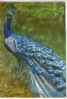 peacock paintings prints | Peacock Painting by Suzanne Francis - Peacock Fine Art Prints and ...
