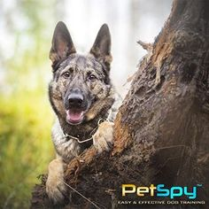 Best Shock Collars with remote gives you the power to prevent unwanted and possibly dangerous situations. Buy Dog Training Collars here. Electric Dog Collar, Dog Shock Collar, Collar Designs, Training Your Dog, Behavior, Collars, Plastic, Tools, Pets