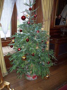victorian christmas  tree London England- Bing Images