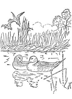 nature coloring pages for adults to print - Nature Coloring Pages