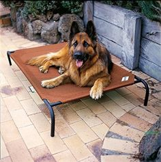 Amazon.com : Coolaroo Elevated Pet Bed Large Brunswick Green : Dog Cot : Pet Supplies