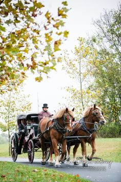 Horse and carriage in Fall foliage at Salamander Resort. Photo by The Observatory.