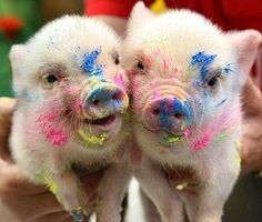 These piglets got into some paint. Don't worry it was non-toxic!