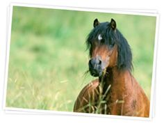 Nutritional insights about Laminitis