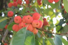 Fresh grown fruit