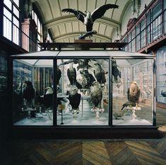 Museum National D'Histoire Naturelle | Paris, France 1982 - Richard Ross