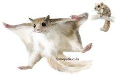 하늘다람쥐(Pteromys volans aluco)