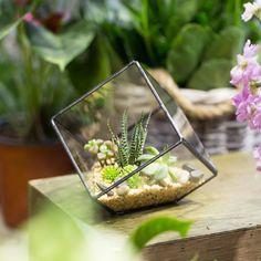 Cubic Geometric Glass Succulent Terrarium