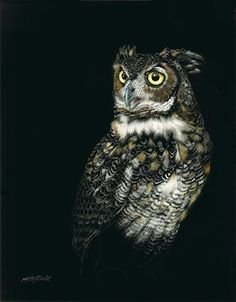"""Great Beauty by Heather A. Mitchell Scratchboard ~ 14"""" x 11"""""""