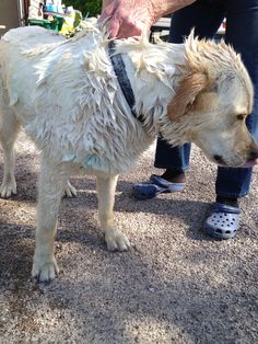 Even the dogs get cleaned up before it's showtime! www.walterstheatre.com