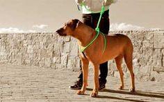 Rope-N-Go Hardware-Free Pet Harness