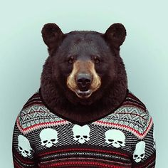 Zoo Portraits – Animals Dressed For Photographs (15 Pictures) > Fashion / Lifestyle, Film-/ Fotokunst, Funny Shizznits > animals, dressend up, styled, suited