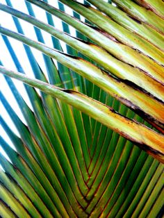 traveller's palm —Bali (by Farl) Travellers Palm, What A Beautiful World, Palm Fronds, Color Patterns, Bali, Summertime, Plant Leaves, Colours, Nature