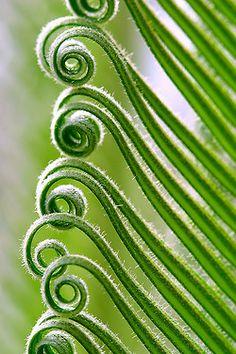 . Photographie Macro Nature, Spirals In Nature, Fotografia Macro, Patterns In Nature, Belle Photo, Natural World, Ferns, Amazing Nature, Shades Of Green