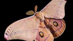Um estudo feito em Londres mostra que apenas 24% das mariposas fugiram de morcegos quando estavam na luz LED, contra 60% que escaparam quando estava escuro.