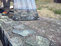 群馬の魚を育てる会ヤマメ稚魚配布・桃ノ木放流・赤城FF 2012,4,8  地域の堀払いで、群馬の魚を育てる会ヤマメ稚魚配布には行けませんでしたが、こーちゃんと井田君に行ってもらって、桃の木川の石関橋上流にヤマメ稚魚600尾程度を放流しました。とてもいい状態で放流できました。もちろん、群馬漁業協同組合には連絡済み...