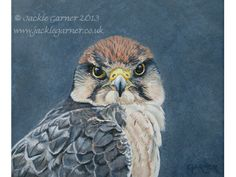 """Lanner falcon, acrylic, 9.75"""" x 11"""" / 25cm x 28cm £250 available from www.jackiegarner...."""