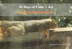 MunchTalk: 31 Days of Color & Joy- Squirrely McSquirrelson