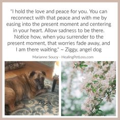 Fade Away, Pet Loss, Love Messages, Grief, Peace And Love, First Love, Angel, In This Moment, Pets