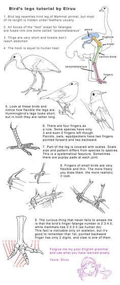 Bird legs tutorial by Elruu.deviantart.com on @deviantART