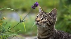 cat with flowers - - Yahoo Image Search Results