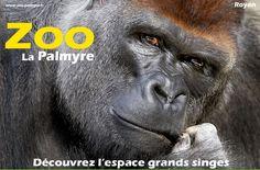 Tourist Attractions In France La Palmyre Zoo