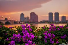 Palm Beach Floral Sunset overlooking Downtown West Palm Beach copyright 2014 justin kelefas