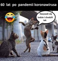 Animals on street talking about us! Funny Animals With Captions, Funny Animal Memes, Animal Quotes, Cute Funny Animals, Cute Cats, Funny Cats, Funny Memes, Poem Memes, Memes Humor