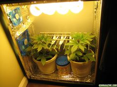 Small Grow Box I like this system. It is an awesome piece of furniture to have in your place. A super grow box can save you hundreds of dollars. Have a peak and be amazed by its sheer brilliance.