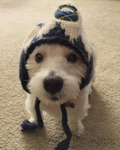 Getting ready to go play in the snow with sis!! Go @buffalosabres! #instadogs #dogsofinstagram #dogslife #westie #westiegram #snow #snowday #buffalosabres #hat
