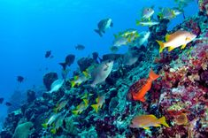 Get a taste of underwater Bermuda with a one-tank dive. Kings Wharf Bermuda, Maui Vacation, Caribbean Sea, Caribbean Cruise, Celebrity Travel, Tropical Fish, On Your Wedding Day, Design Art, St George's