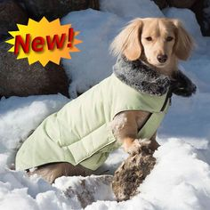The Tamarack Puffy Coat for Dogs is the best winter jacket out there. Wind and waterproof outer shell and temperature rating below 10 degrees F. Yorkie, Chihuahua, Small Dog Accessories, Cool Dog Collars, Best Winter Jackets, Dog Insurance, Dog Care, Dog Treats, Small Dogs