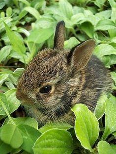 bunny by fretfuljo