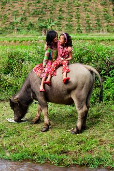 Friendship . Vietnam stay with us here in our collection of affordable B&B accommodation www.1bb.com