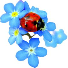 Tattoo?  Ladybug for Lainey and Forget Me Nots for Mom Rice (Alzheimer's Flower)  They are both Jeanettes.