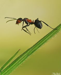 awsome shot, Ant Leap by Jorge Fardels