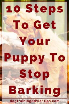 Dog And Puppies Labradoodle 10 Steps To Get Your Puppy To Stop Barking. And Puppies Labradoodle 10 Steps To Get Your Puppy To Stop Barking. Dog Training Bells, Dog Training Treats, Puppy Training Tips, Training Your Puppy, Crate Training, Potty Training, Dog Treats, Dog House Air Conditioner, Stop Dog Barking