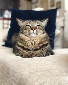 Cute kittens are fun Funny Cat Photos, Funny Cats, Funny Animals, Cute Animals, Funny Humor, Funny Pictures, Easy Animals, Pretty Cats, Beautiful Cats