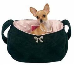 """The Coco Bow carrier, comfy and chic"" is another great idea from W. Field's Dog Boutique!"