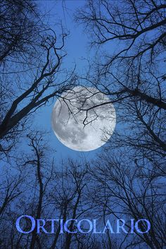 Luna  Ph. Luciano Movio Photographer #Orticolario #gardening #garden #outdoor #nature #sky #moon #trees #plants #inspiration #photography #foret #forest #paysage #landscape #amazing #travel #night #moonlight #LaLuna #blue