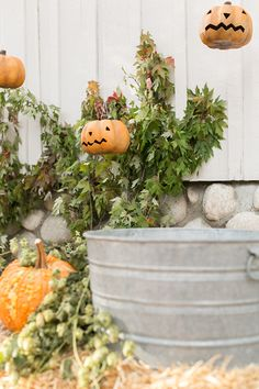Pumpkins hanging