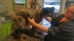 Chinto's hair cut