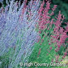 1000 images about landscaping jobs on pinterest low for Low maintenance perennials zone 4